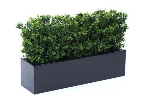 Boxwood Evergreen Shrubs from Home Depot
