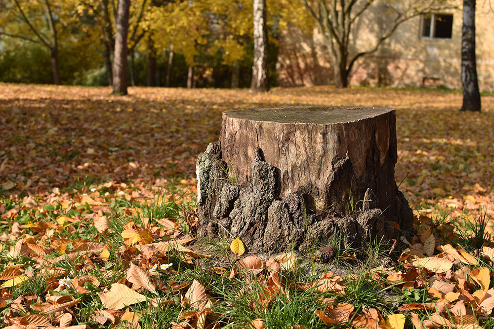 itc-tree-stump-yard.jpg