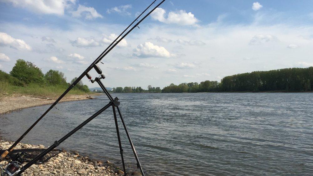 Rhein bei Bonn.jpeg