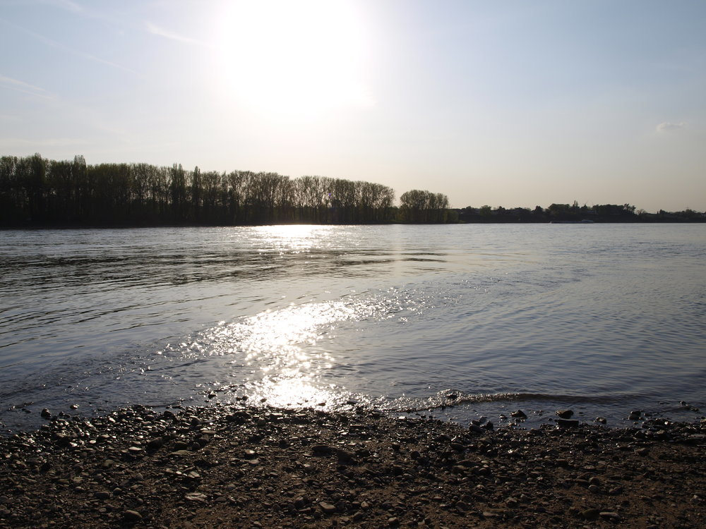 Rhein bei Bonn.JPG