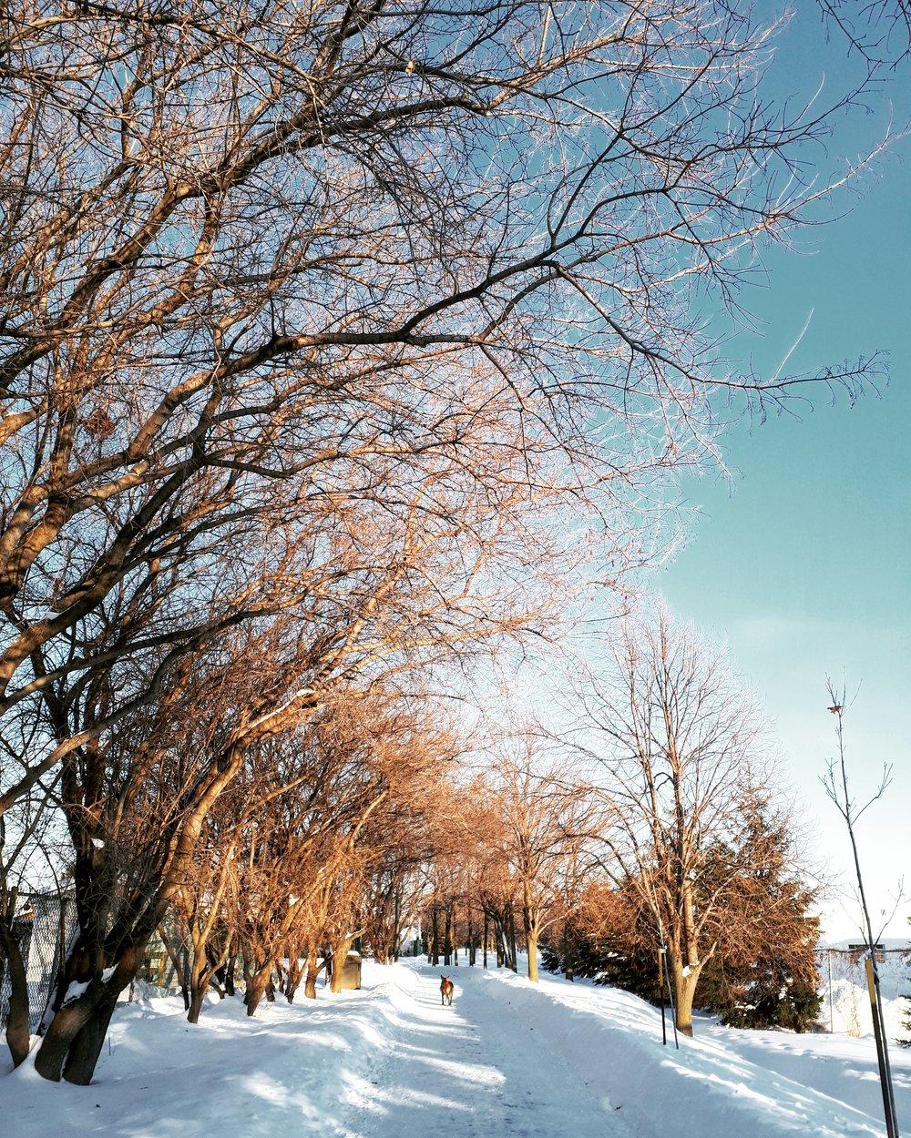 15 février Réseau Cyclo-Pédestre du parc Armand-Frappier (Ste-Julie) 2.jpg