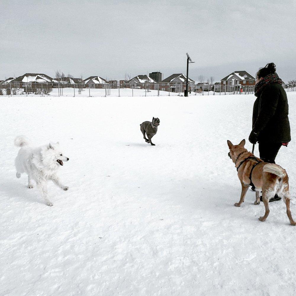 Brossard Dog Park 3.jpg