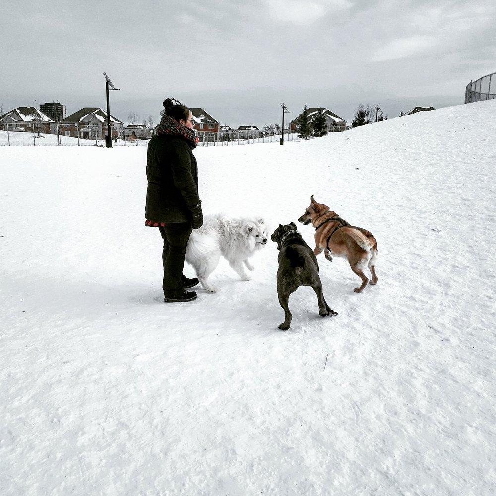 Brossard Dog Park 2.jpg