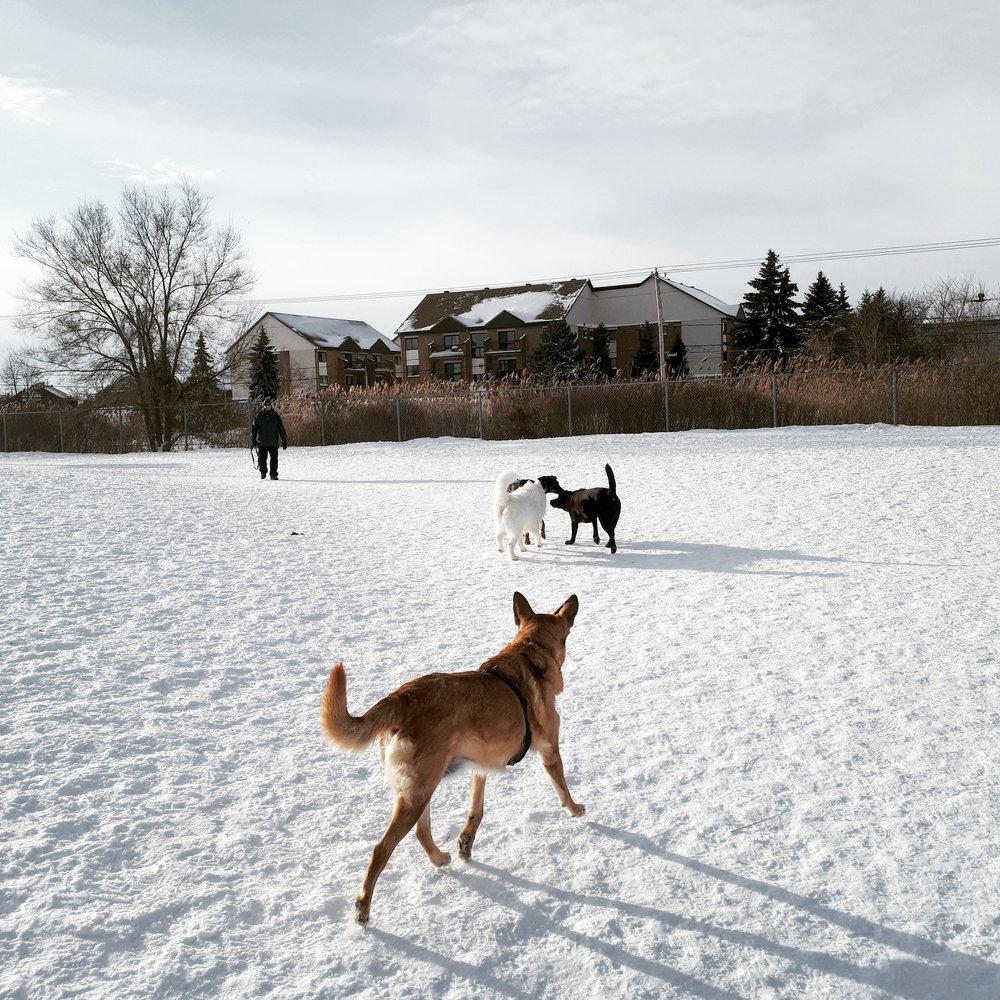 Brossard Dog Park 1.jpg