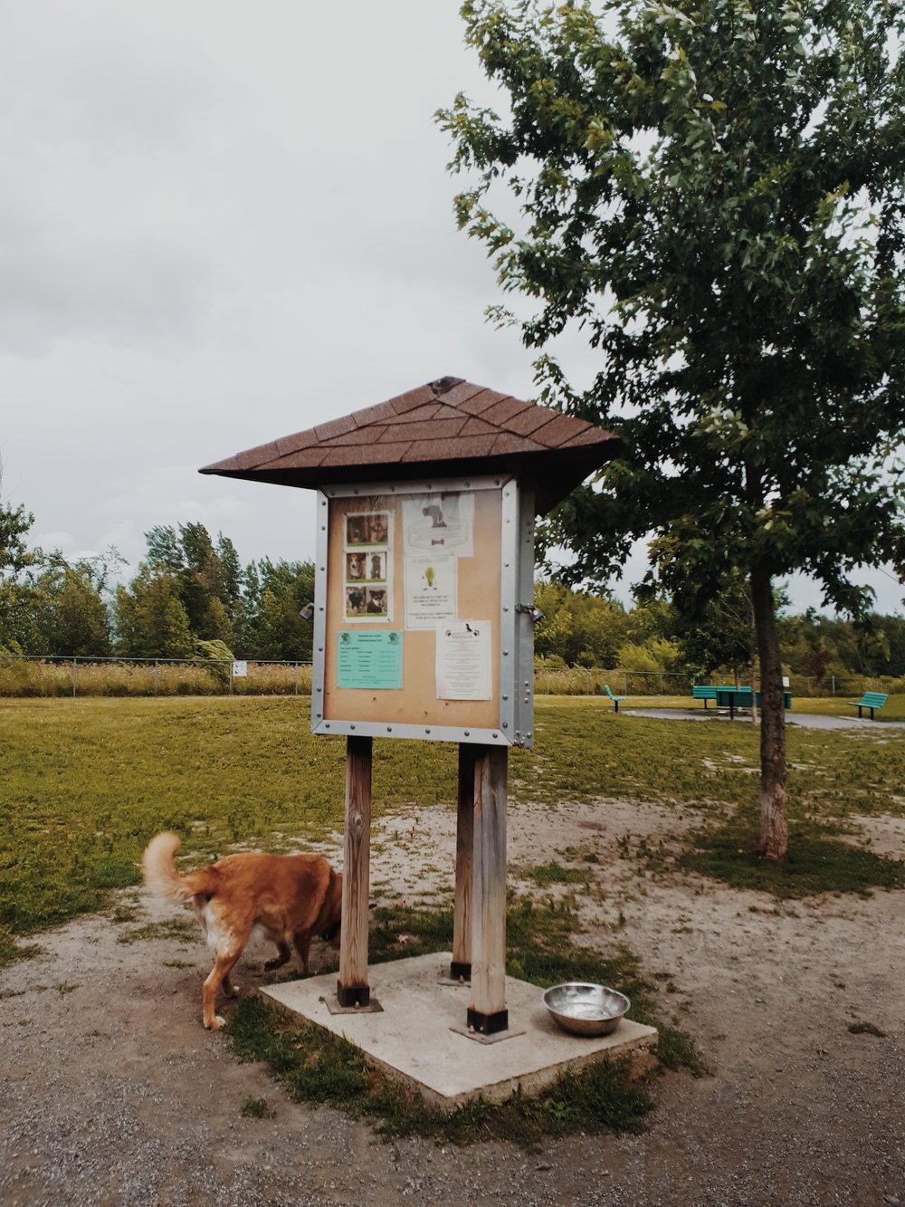 parc a chien ste-julie.jpg