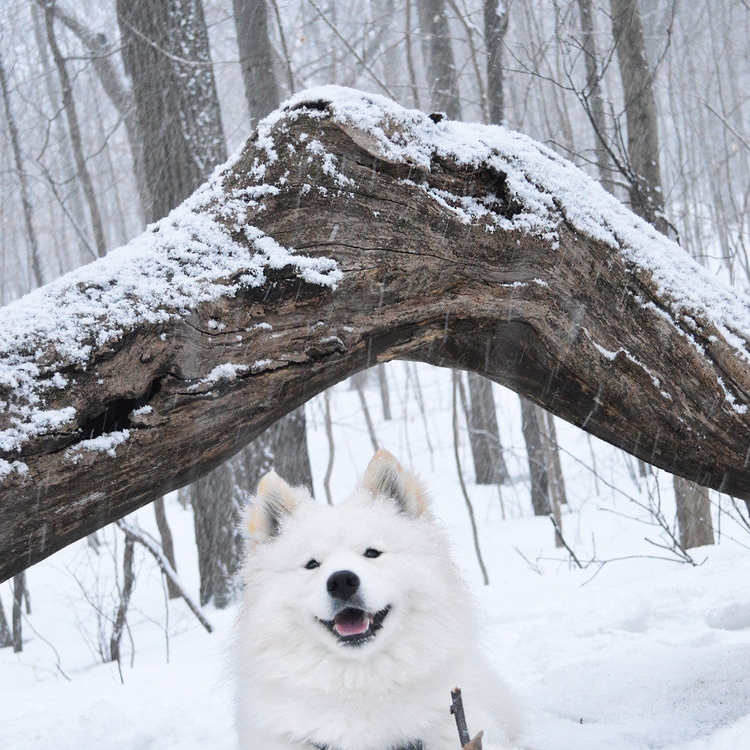 Summit Woods -