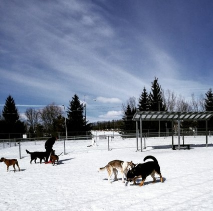 Parc canin Victoria -