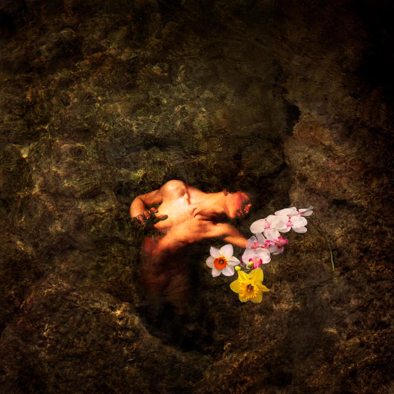 Narcissus_XXVIII_BGS_800x.jpg