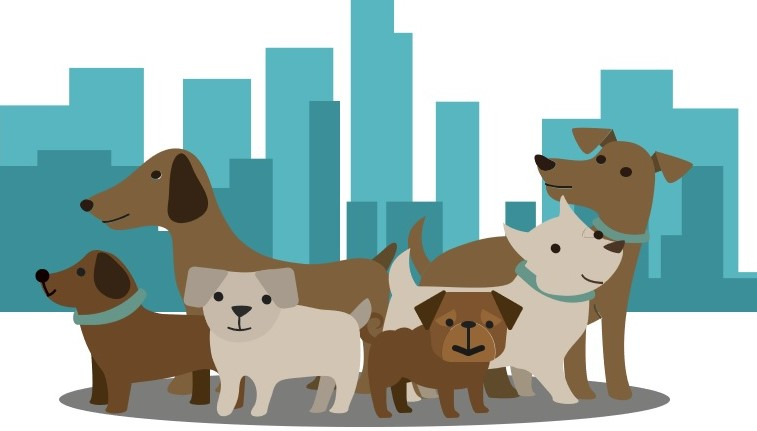 RISE Program   In honor of 125 Acts of Random Kindness staff from our RISE Program are requesting donations for North Shore Animal League and The Guide Dog Foundation. The goal is 125 donations for our furry friends!