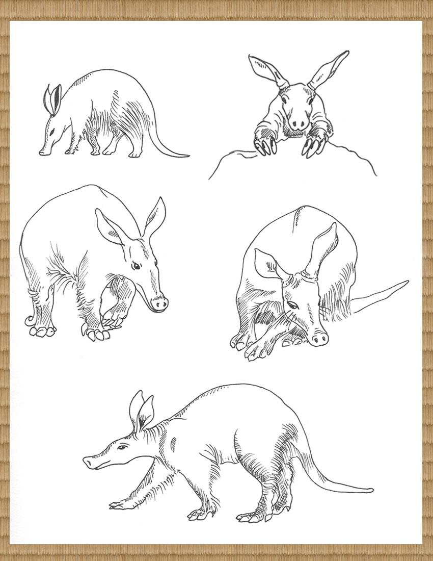 anteatersGallery.1.jpg