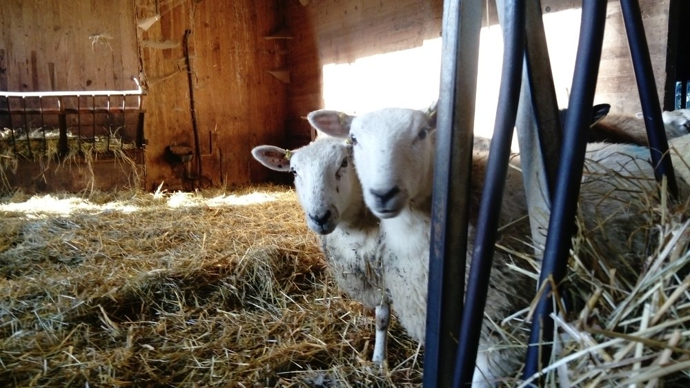 What are  ewe  doing?