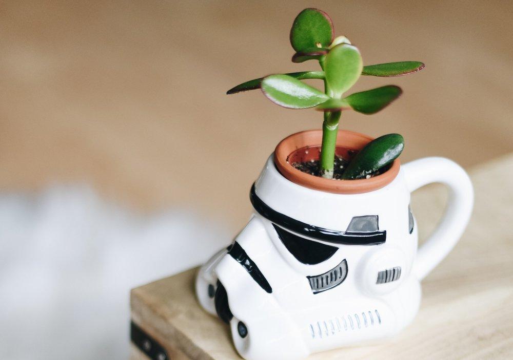 starwars plant.jpg