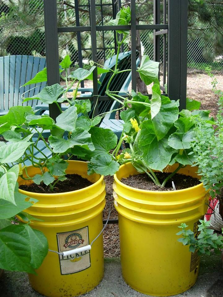 lynn community gardens.jpg