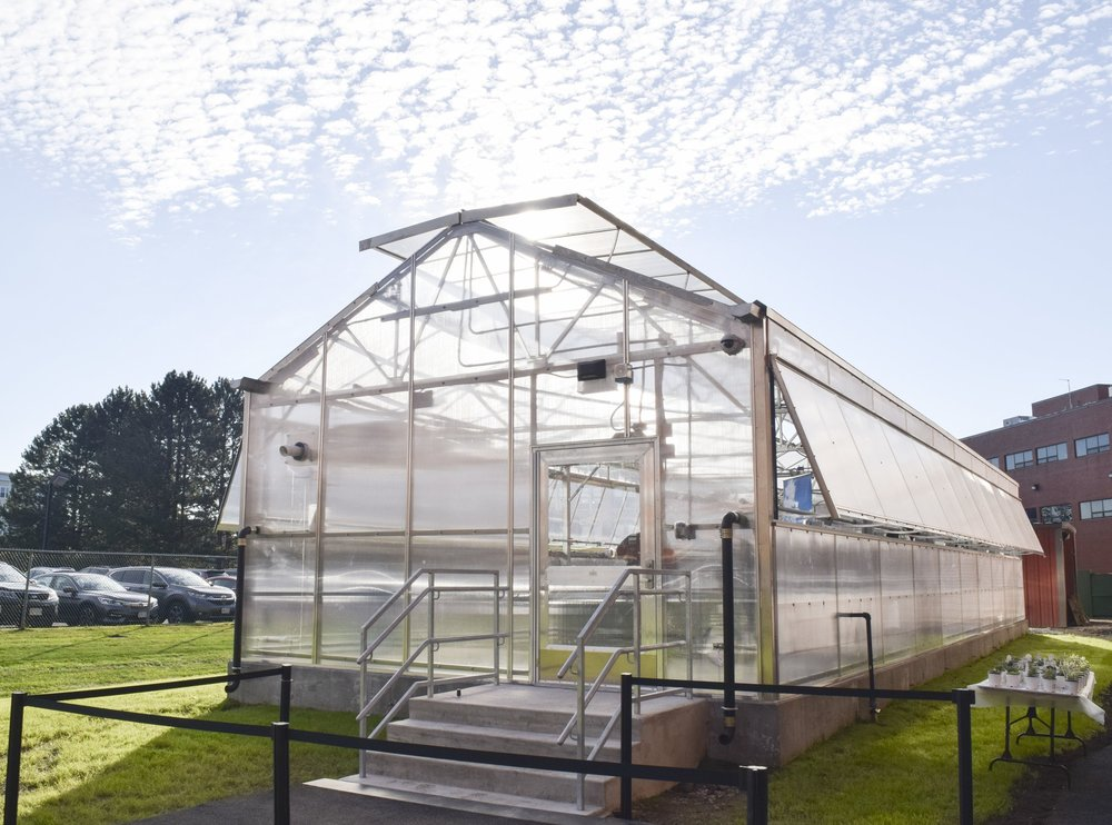 New Lynn Greenhouse