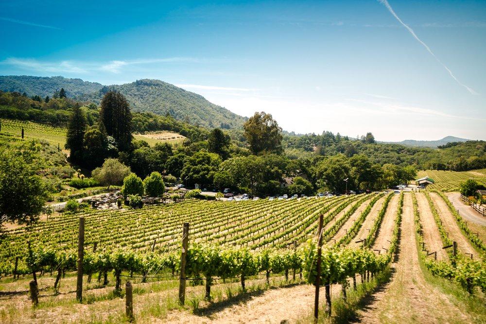 1er Jour: Parcourez les vignobles àvélo électrique - Arrêtez-vous dans un moulin à huile d'olive, un fromager et une cave.