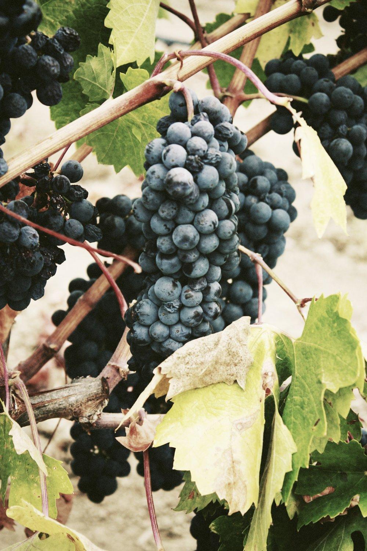 4eme Jour: Plage, pique-nique & vins - Plage le matin, pique-nique sur l'île de Bendor et dégustation de vins