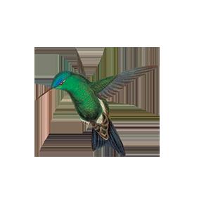 bird_2.png