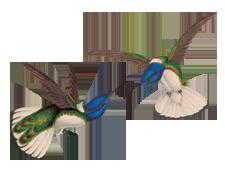 Contact_Birds.png