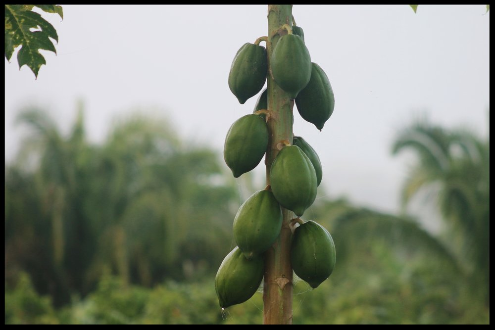 Tropical produce paradise!