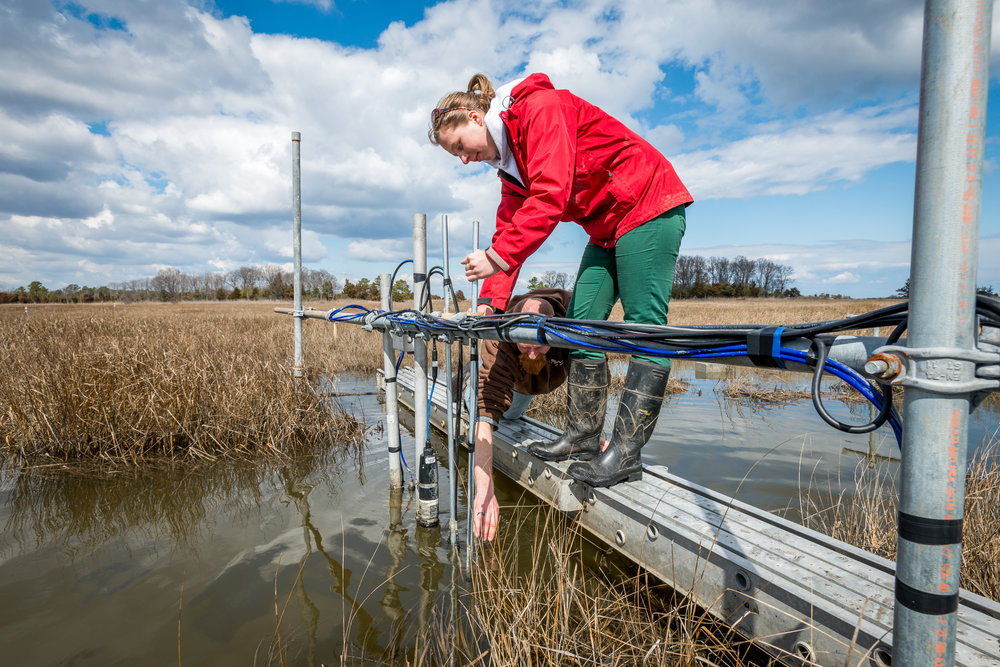 Delaware Sea Grant-Delaware National Estuarine Research Reserve Fellowship - The Delaware Sea Grant-DNERR Fellowship offers graduate students studying environmental science, engineering and social science an opportunity to conduct research within the St. Jones and Blackbird Creek Reserves.Applications are due by 3 p.m. on April 19, 2019.