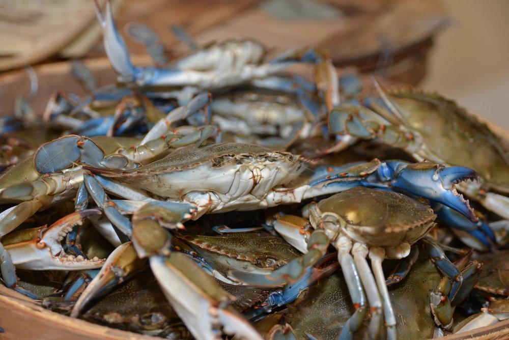 Aquaculture, Fisheries & Seafood -