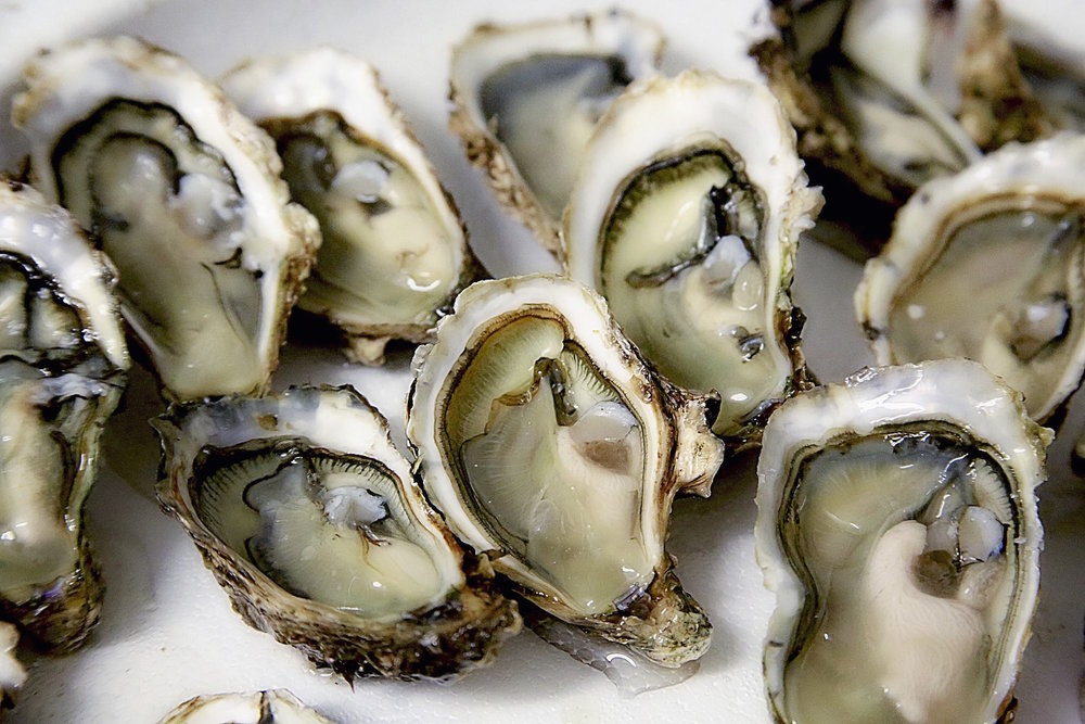 Oyster Aquaculture - Working with the community to create a seashell aquaculture industry in Delaware