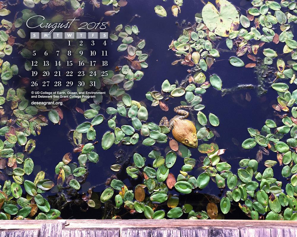 Calendar wallpaper of frog in lillies.
