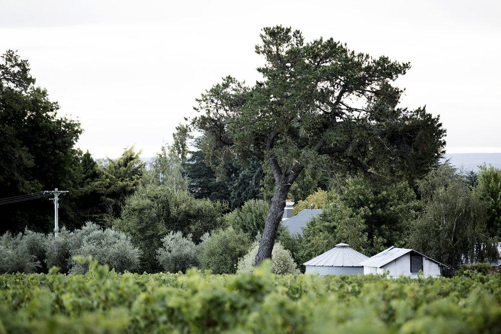 vineyard-18.jpg