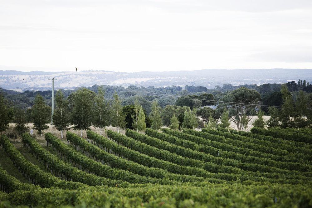 vineyard-19.jpg