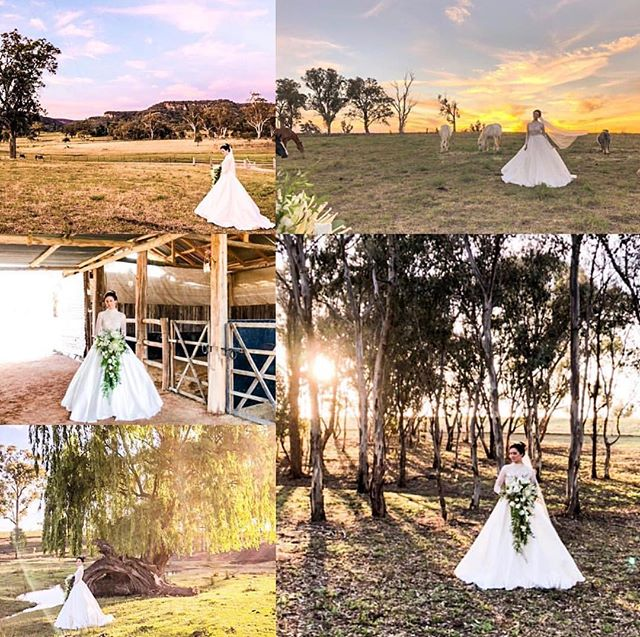 Wow - look at this gorgeous shoot done for @marrymemudgee taken on one of our marquee venue's property - @willowspringsweddings. Are you planning your special day and does the Mudgee region appeal? Get in touch with us or @willowspringsweddings and we can help your wedding dream come true ☺️❤️ #mudgee #mudgeeregion #mudgeewedding #ido #loveisintheair #wedding #weddingbells #marqueewedding #marquee #visitmudgee #mudgeeweekend #rylstone #lue #bride #photoshoot #weddingdress #countrystyle #countrywedding @mudgeeregion @visitnsw #unearthcentralnsw