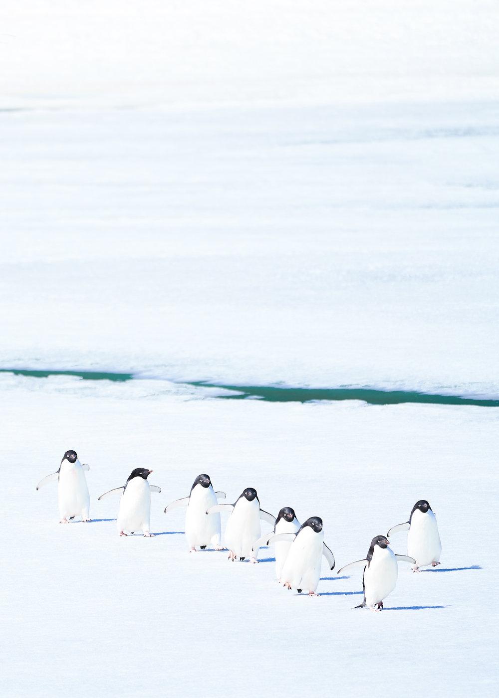 cotsen-antarctica-2018--14.jpg