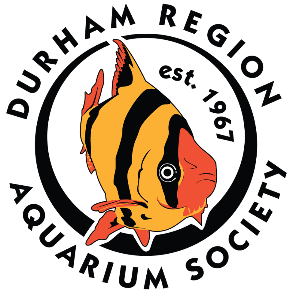 Durham Region Aquarium Society