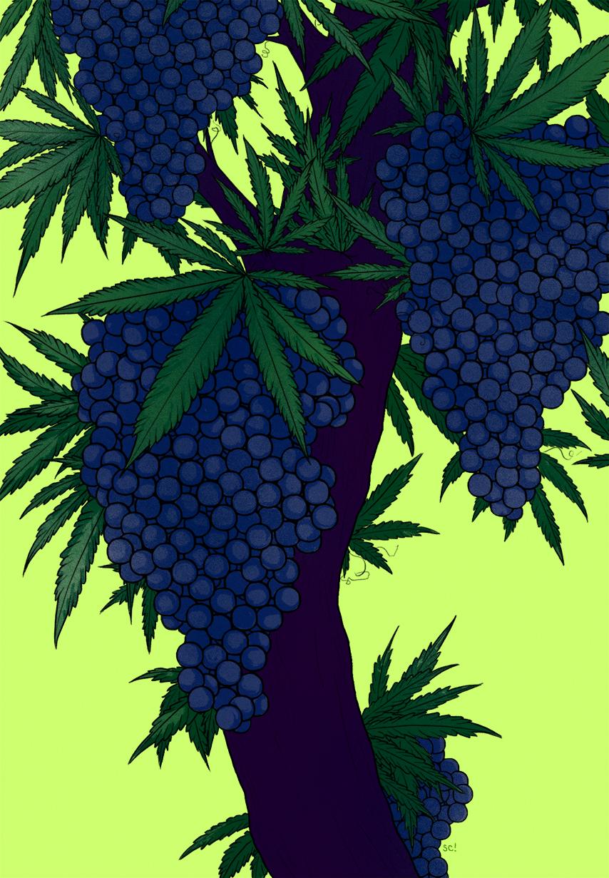 Pinot vs. Pot