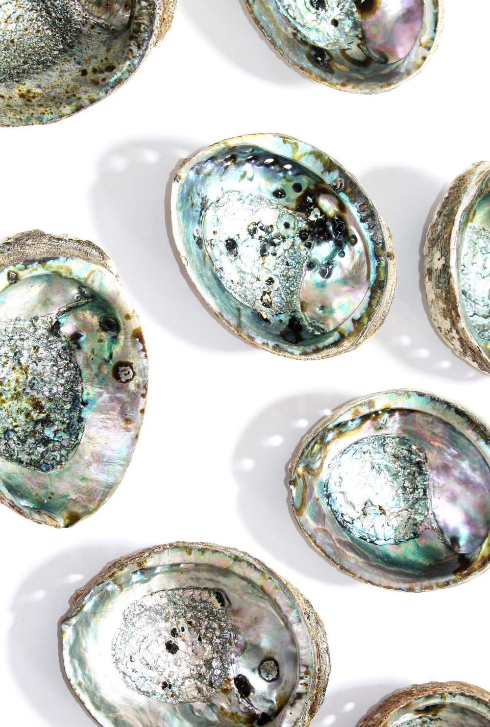 Abalone Shell Wallpaper