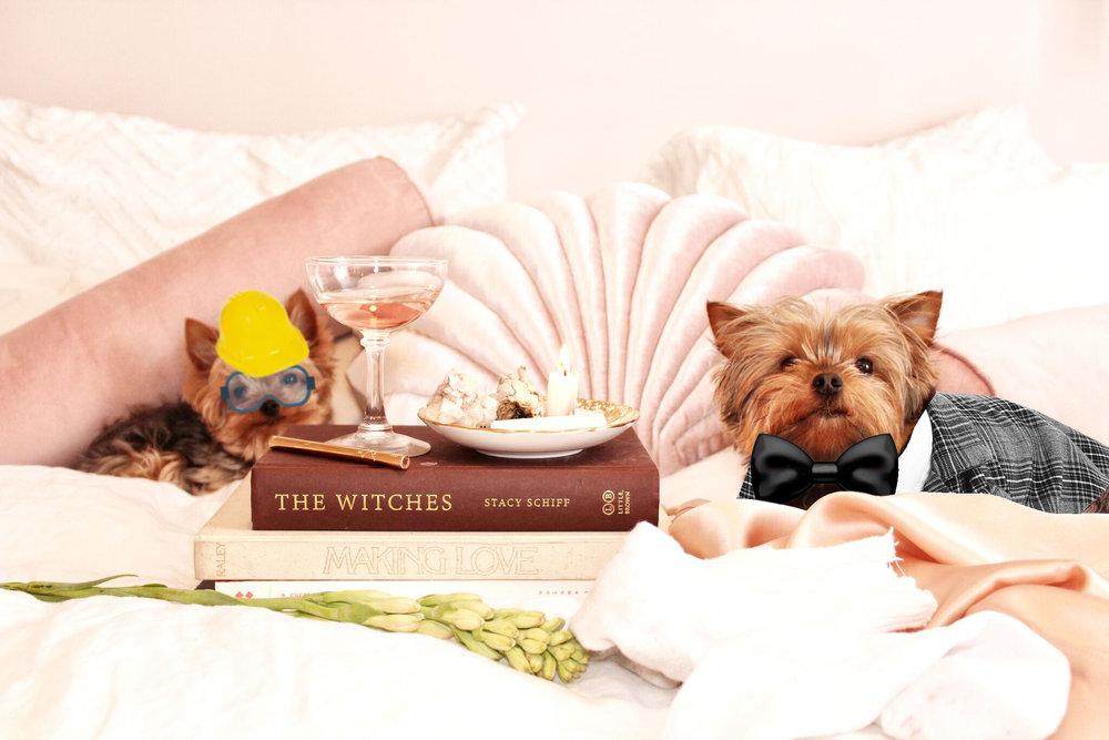 Dogs photoshopped.jpg