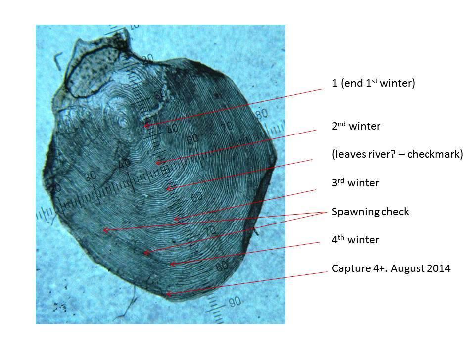 7lb scale sample .jpg