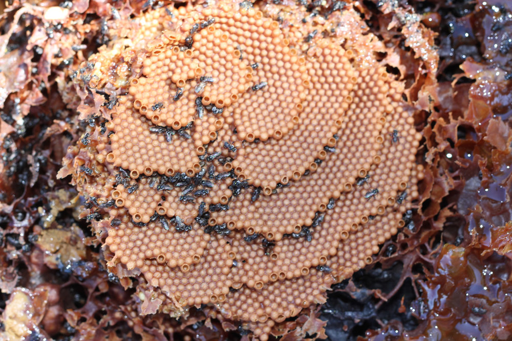 Australian-Native-Bee-Workshop-Image.jpg