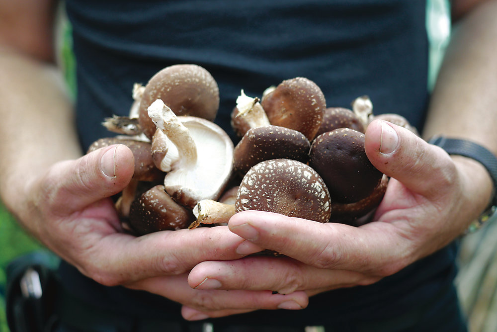 Milkwood mushrooms KIRSTEN BRADLEY 3818.jpg