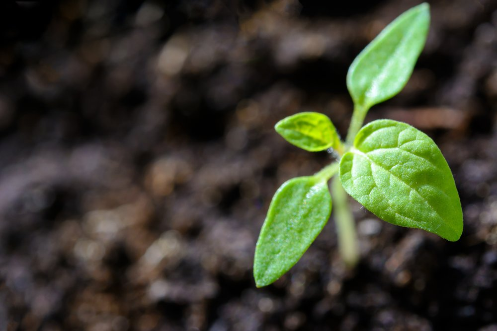 agriculture-close-up-cultivation-1002703.jpg