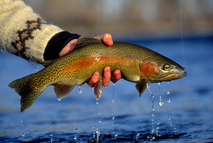Fly Fishing near Yellowstone! We offer The BEST whitewater rafting & Yellowstone activities for your family! Located in Gardiner, Montana,
