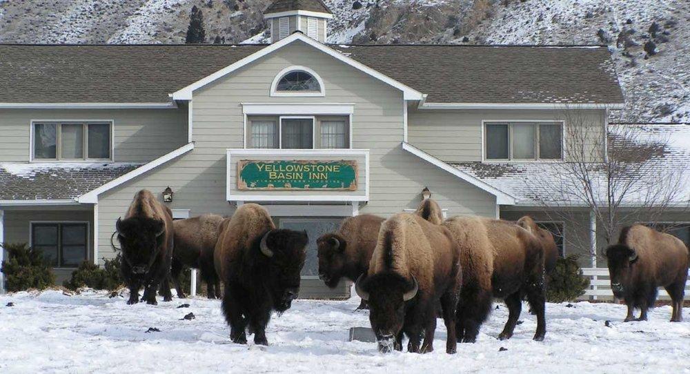 Yellowstone Basin Inn -