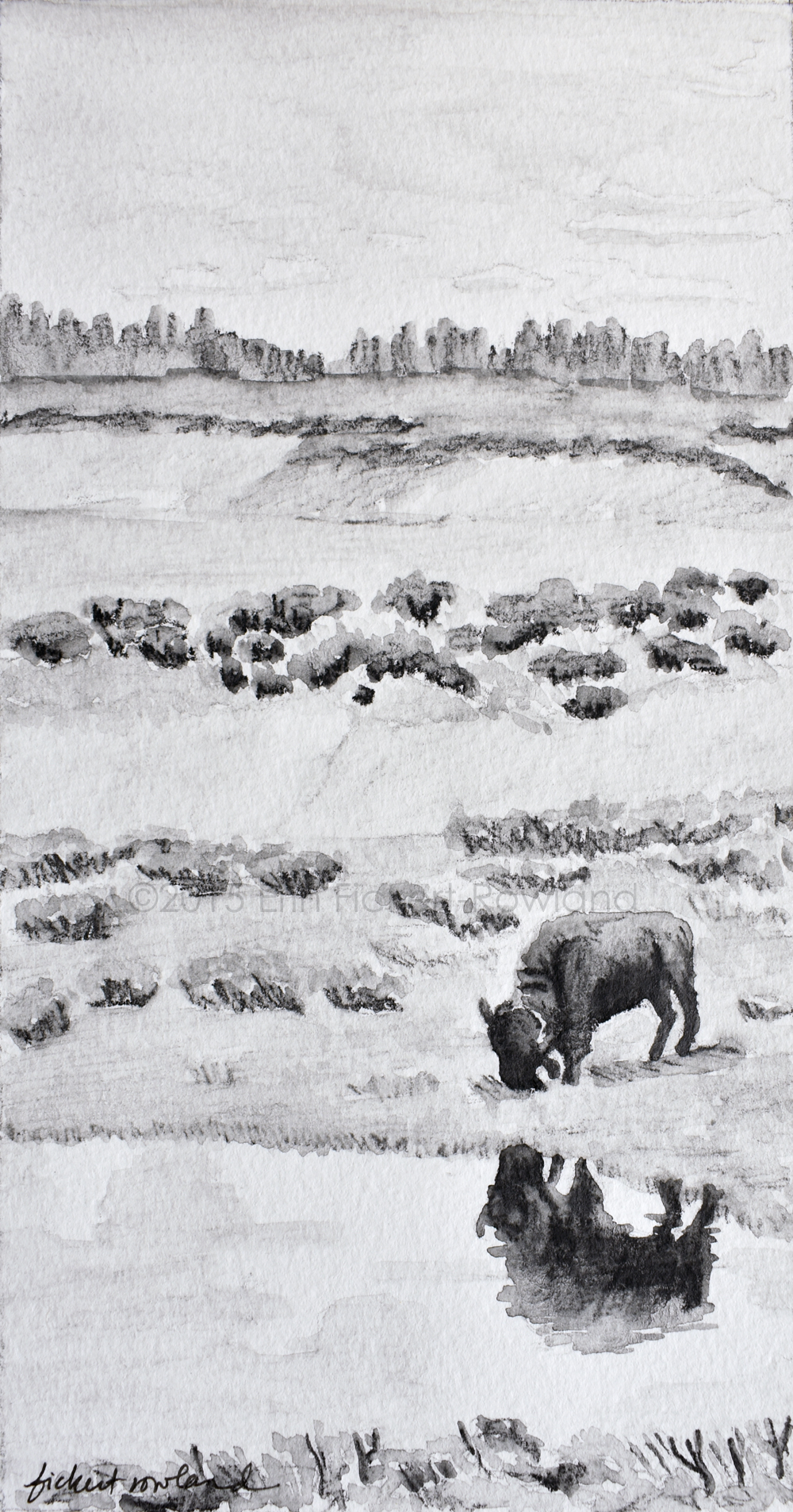 """Bison Reflection, Yellowstone""  5 in x 9 in  Matted to 7 in x 11 in"