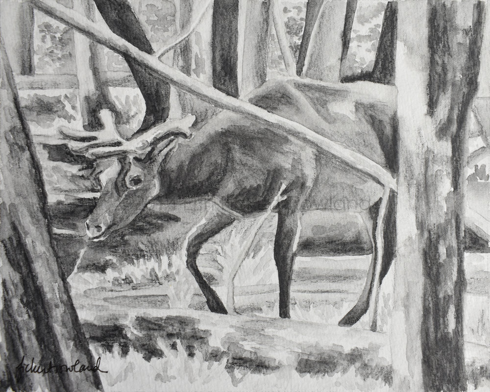 """Moose, Yellowstone""  5 1/2 in x 7 in  Matted to 8 in x 10 in"