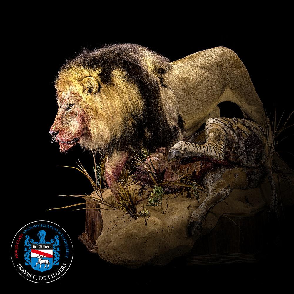 The Kill - Panthera leo