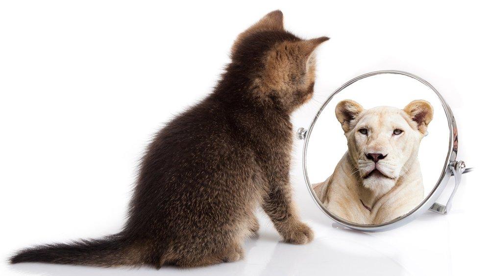Katze im Spiegel.jpeg