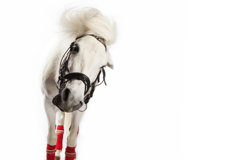 meer Häst