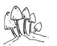 toadstalls-boggy-doodle.jpg