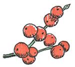 berry doodle.jpg