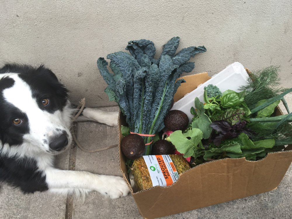 Weekly organic haul from the Bondi Beach farmers markets.