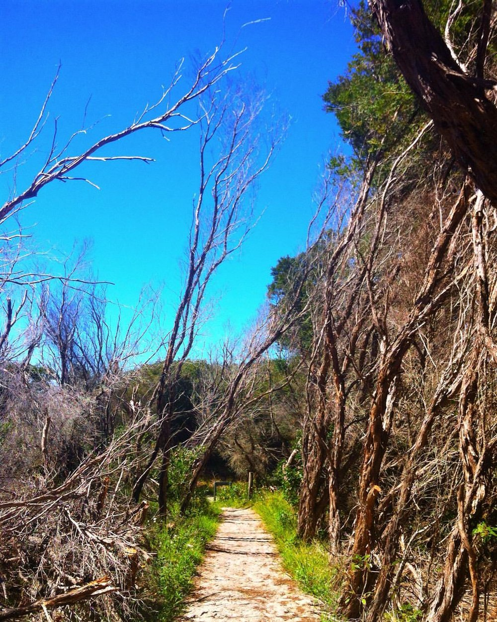 Botany National Park bush hike down around Little Bay/ La Perouse.